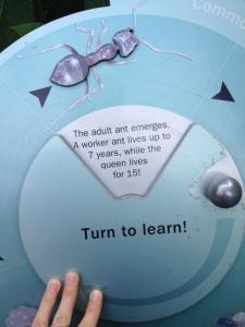 antwoord leeftijd mier
