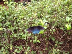 vlinders in de tuin1