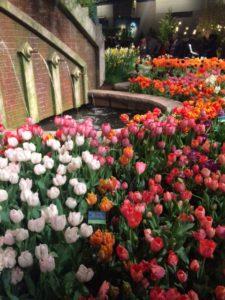 brug met tulpen